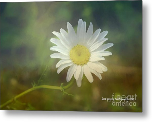 Daisies Don't Tell Metal Print