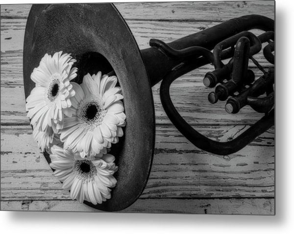Daisies In Tuba In Black And White Metal Print
