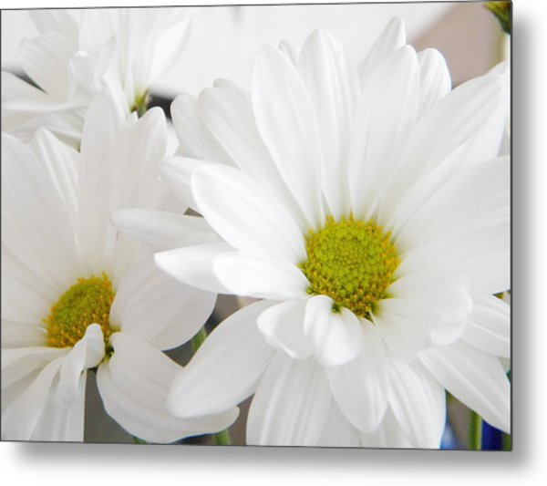 Daisy Metal Print by Alyona Firth