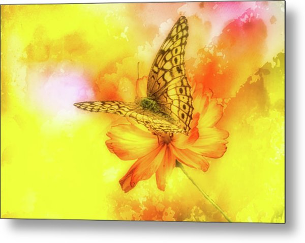Daisy For A Butterfly Metal Print