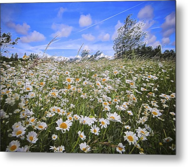 Daisy Heaven Metal Print by Angela Aird