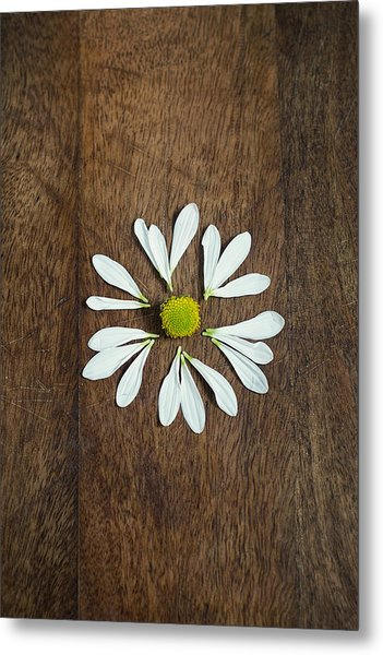 Daisy Petals On Wooden Background  Metal Print