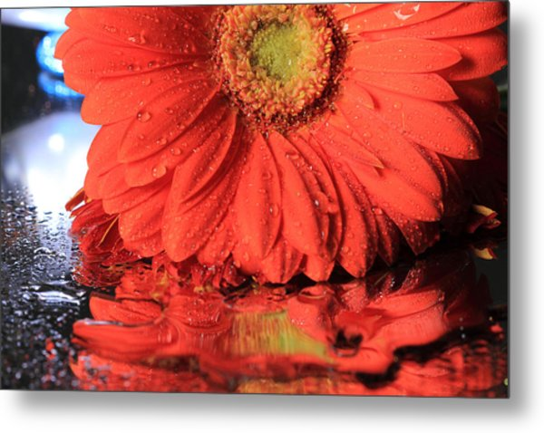 Daisy Reflections Metal Print