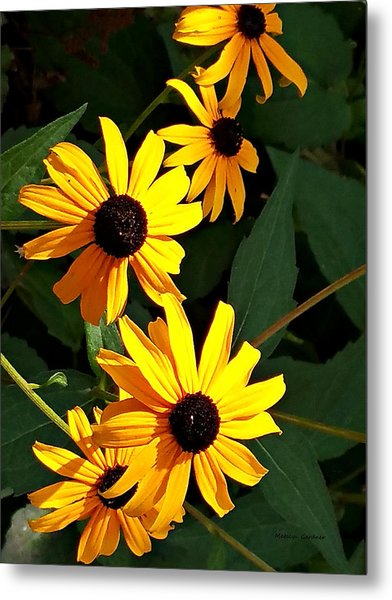 Daisy Row Metal Print