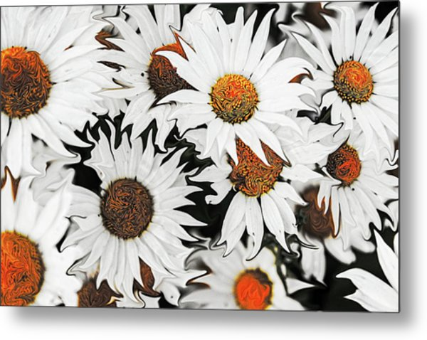 Daisy With A Twist Metal Print