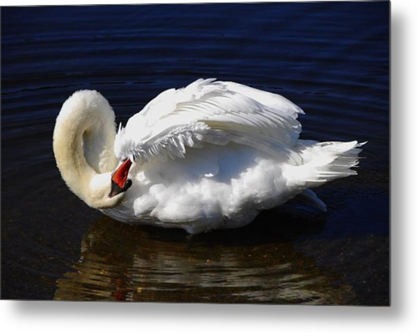 Dance Of The Swan Metal Print