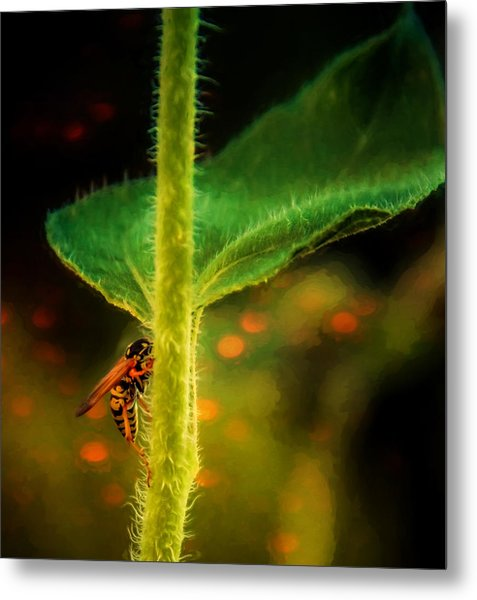 Dance Of The Wasp Metal Print