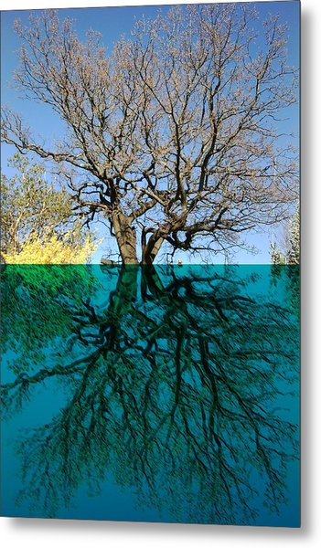 Dancers Tree Reflection  Metal Print