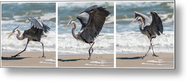 Dancing Heron Triptych Metal Print