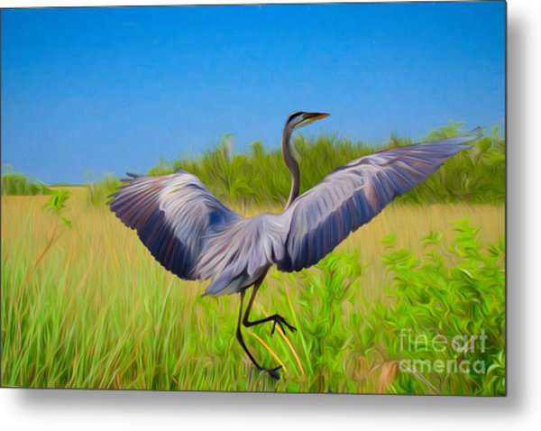 Dancing In The Glades Metal Print