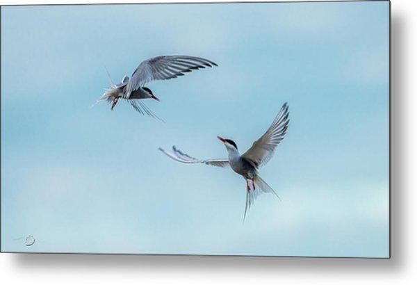 Dancing Terns Metal Print