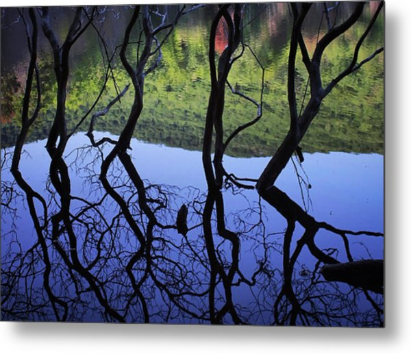 Metal Print featuring the photograph Dancing Trees by Jessica Tabora