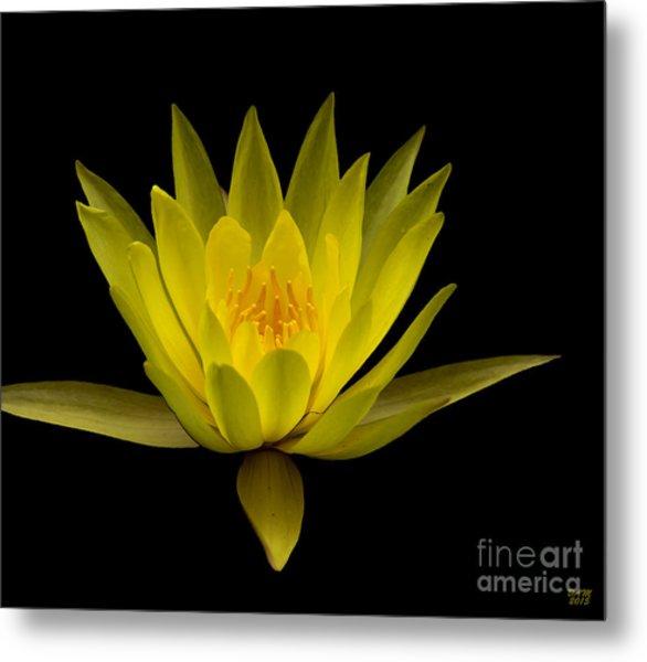 Dancing Yellow Lotus Metal Print
