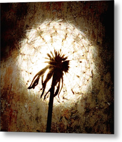 Dandelion Art 5 Metal Print by Falko Follert