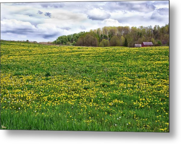 Dandelion Field With Barn Metal Print