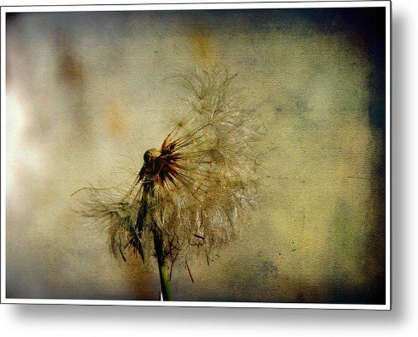 Dandelion Flower Metal Print by Valmir Ribeiro