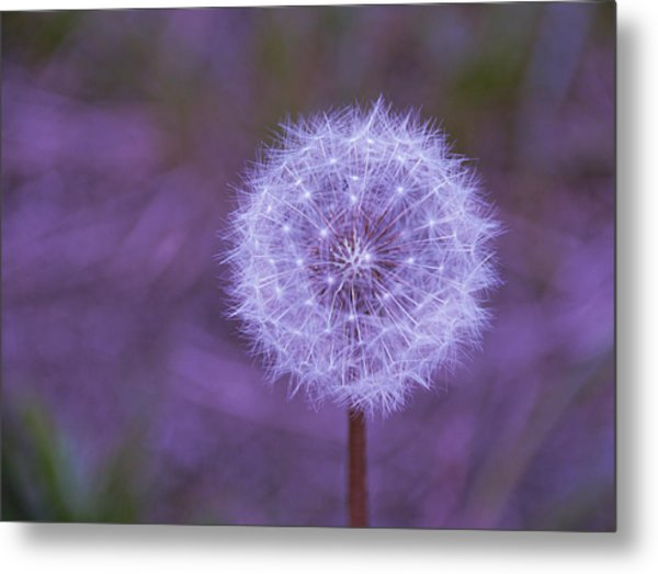 Dandelion Geometry Metal Print
