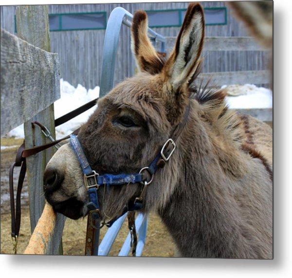Daniel The Donkey Metal Print