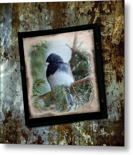 Dark-eyed Junco Metal Print