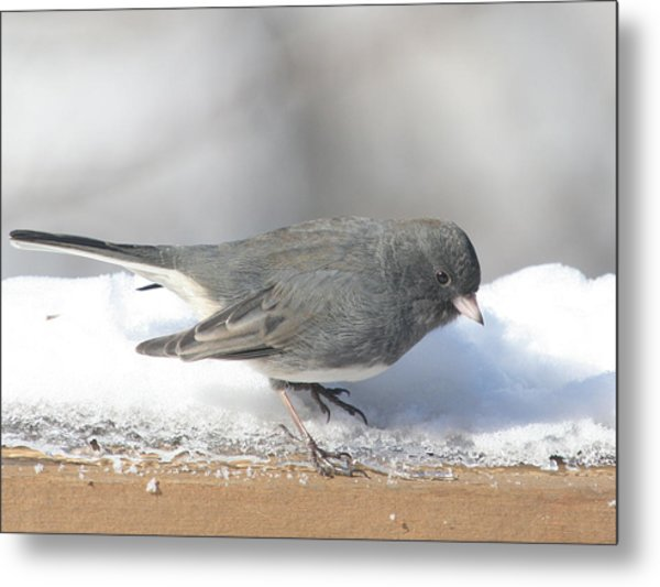 Dark Eyed Junco On The Railing 3 Metal Print by Laurie With