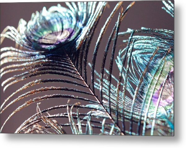 Dark Feathers Metal Print