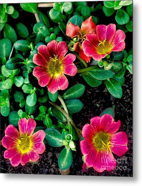 Dark Pink Purselane Flowers Metal Print