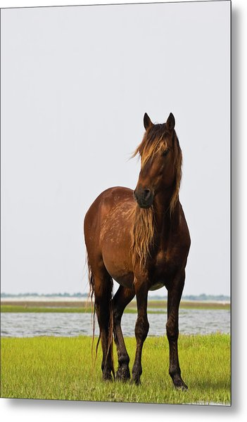Dark Stallion Metal Print
