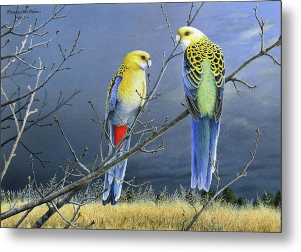 Darkness Before The Deluge - Pale-headed Rosellas Metal Print