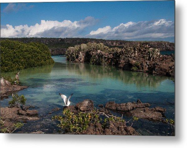 Darwin Bay     Genovesa Island      Galapagos Islands Metal Print