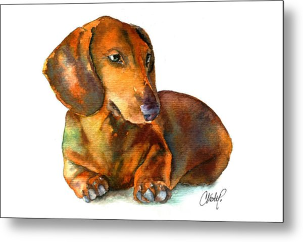 Daschund Puppy Dog Metal Print