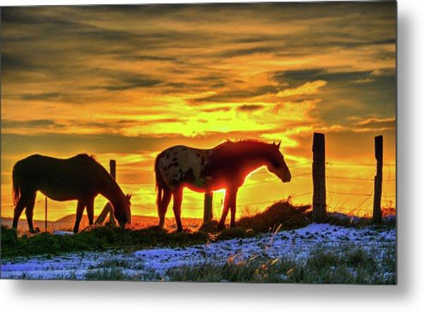 Dawn Horses Metal Print