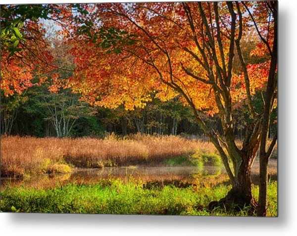 Dawn Lighting Rhode Island Fall Colors Metal Print