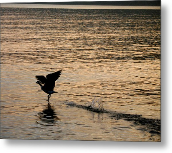 Dawn's First Flight Metal Print by Cathy Weaver