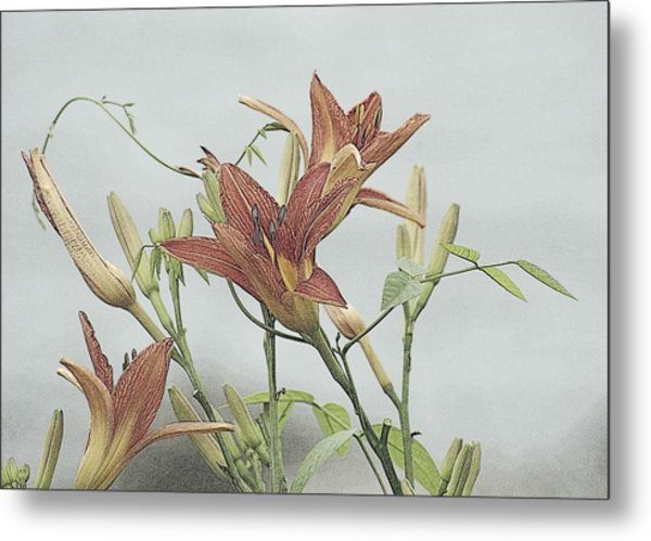 Daylilly Dreaming Metal Print