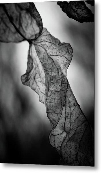 Fragile Leaf Bw Metal Print