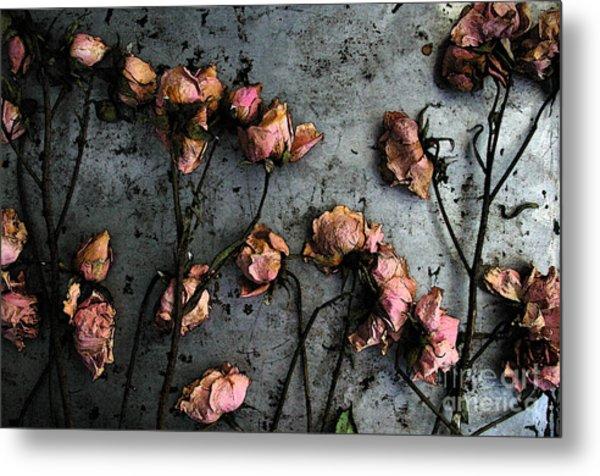 Dead Roses 5 Metal Print