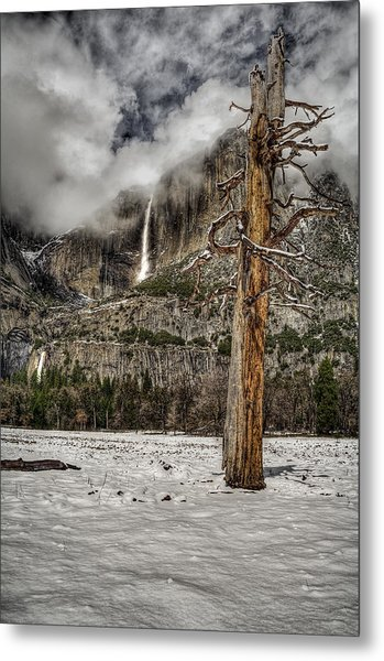 Dead Tree In Yosemite Valley Metal Print