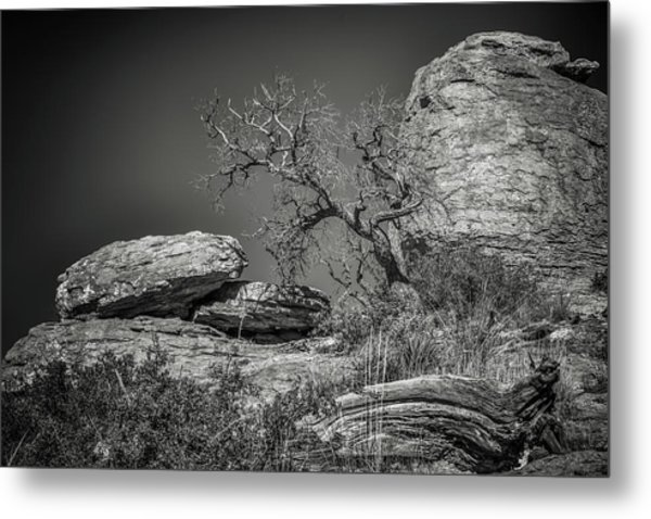Dead Tree With Boulders Metal Print by Joseph Smith