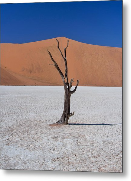Metal Print featuring the photograph Dead Vlei Solo by Rand