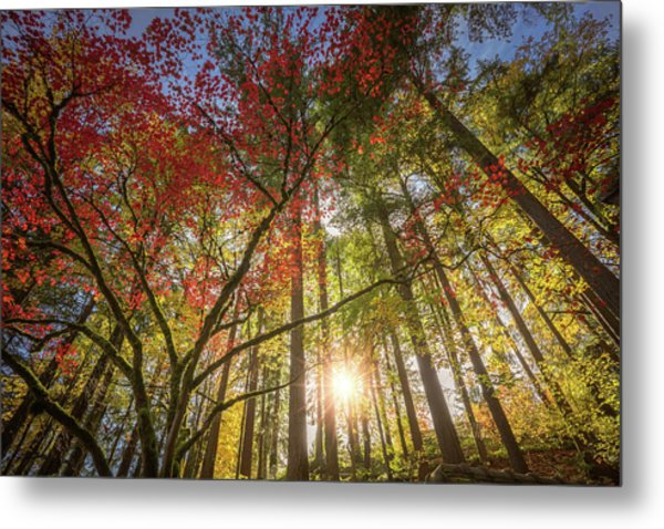 Decorated By Japanese Maple Metal Print