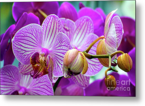 Metal Print featuring the photograph Decorative Fuschia Orchid Still Life by Mas Art Studio