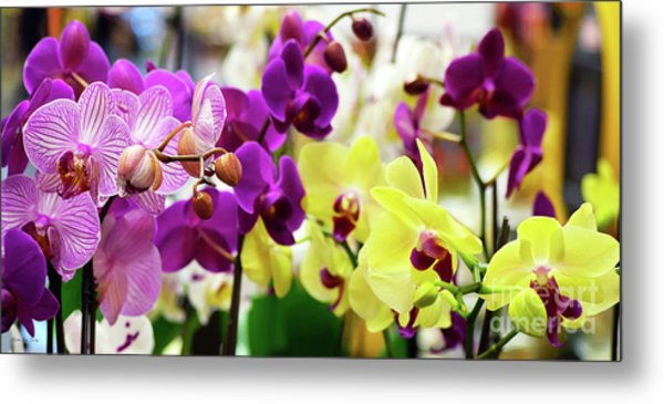 Metal Print featuring the photograph Decorative Orchids Still Life B82418 by Mas Art Studio