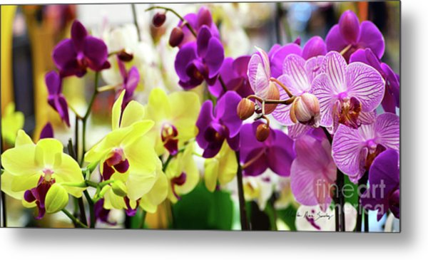 Metal Print featuring the photograph Decorative Orchids Still Life C82418 by Mas Art Studio