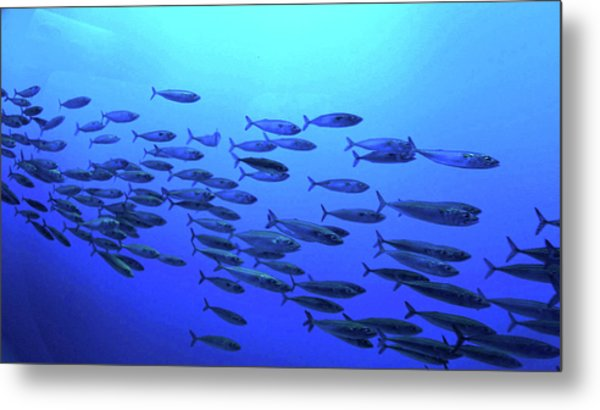 Metal Print featuring the photograph Deep Blue by Pacific Northwest Imagery
