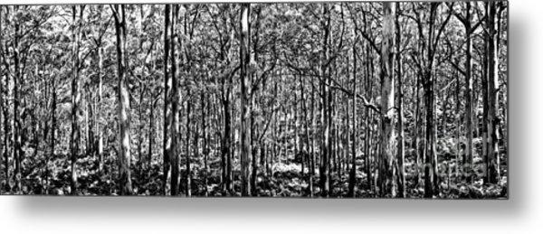Deep Forest Bw Metal Print