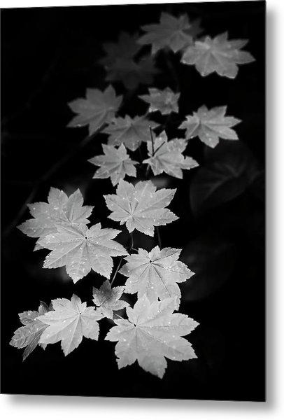 Deep Forest Maple Metal Print