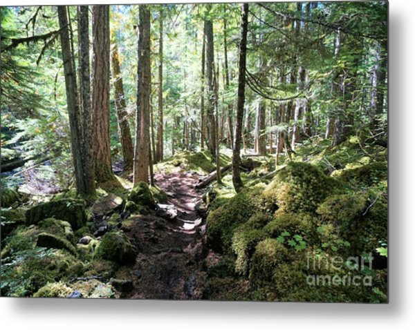 Deep In The Oregon Forest Metal Print
