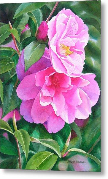 Deep Pink Camellias Metal Print