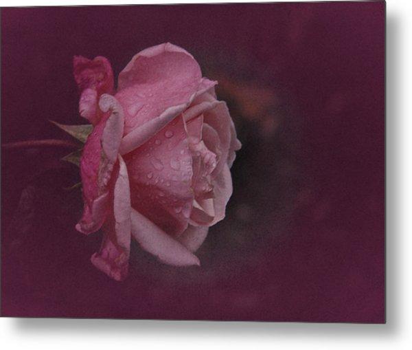 Deep Pink Nov Rose Metal Print