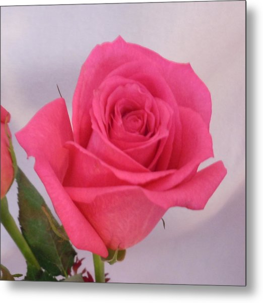 Single Deep Pink Rose Metal Print